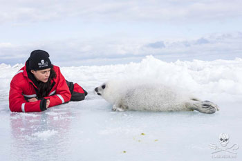 Michelle Rodriguez with harp seal pup - Photo Bernard Sidler - Sea Shepherd