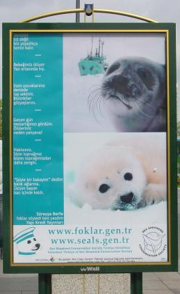Harp Seal Sidewalk Ad in Turkey