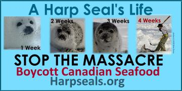 A Harp Seal's Life Banner
