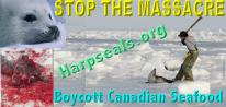 Stop the Massacre Car Decal