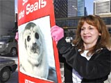 Calgary Seal Hunt Protest