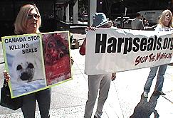 Protest with Harpseals.org banner