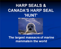 Harpseals.org library display