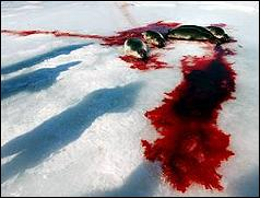 Bloody seal bodies on ice