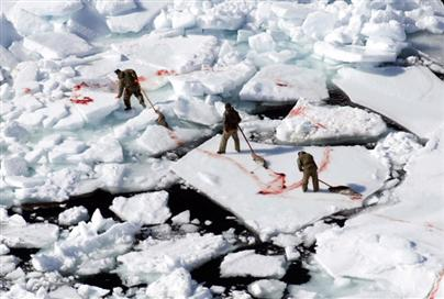 Canadian fishermen killing seals 2008