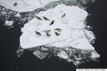 Seal pups on ice floe - Randy Risling - Toronto Star - Getty Images
